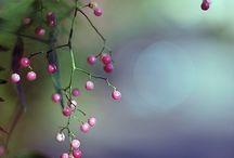 fiori piante
