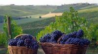 Vini nobili / Rubrica sui vini nobili d'Italia