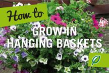 Hanging Basket Inspiration / Inspiration to create beautiful, big and bright and hanging baskets.