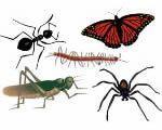 Invertebrates = BUGS!