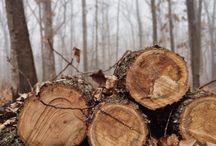 Metsä Puut Pensaat