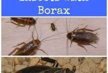 Solutions Insectes / Bestioles