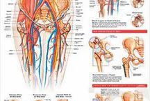 Hip (Hip Injury, Injury Prevention, Pain & Healing)