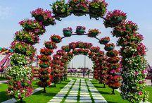 Jardín Dubai