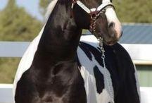 Bonte paarden