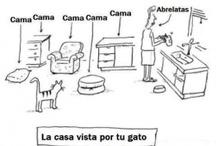Spanish - La Casa