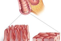 Gastroenterology / Diseases of the stomach, intestines and bowel. / by Mayo Clinic