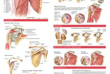 Anatomy and Injuries