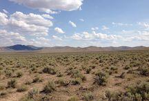 Sagebrush In The Desert