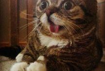Meow! / Cats!
