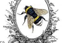 Méhecske, méz, légy, bogár.