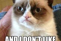 Grumpy cat / by Mandy Harness