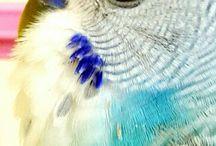 Fıstık kuşum