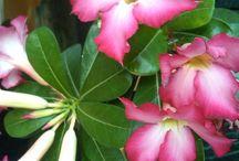 Gambar bunga / Various Flowers