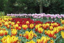 Keukenhof, Holanda  / Tulipanes