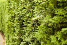Gardening - Shrubs, Hedges, Trees