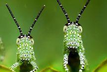 Macro insetos