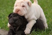 Irrezistible cute dogs