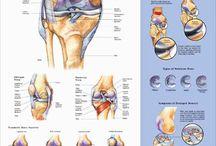 Knee Injuries & Knee Brace Arthritis