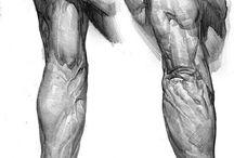 HUMAN BODY I ANATOMY