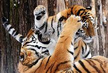 Zoo Dvur Kralove nad Labem / Zoo Dvur Kralove nad Labem, Safari Dvur Kralove nad Labem, animals