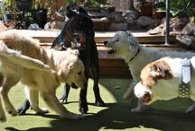 Dogs At Play / Happy Dog Is A Healthy Dog