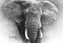 Azul. Mamíferos Elefantes / Aman, lloran, adoptan, hacen amigos, no olvidan, respetan, viven en armonía,etc. Son de una fragilidad y una magnificencia devastadora. Cuando era pequeña pensaba que podía ser como un elefante y me sentía identificada, ahora sé que jamás tendré los valores morales y éticos atribuibles a los elefantes. además sé que si mi especie fuera capaz de imitarlos se acabarían las guerras... ojalá pudiéramos ser como los elefantes... / by tupak Roser Perez Garci