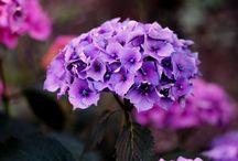 flowers / My bigest inspiration Flowers <3