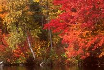 Love fall / Fall / by Mary Stephens
