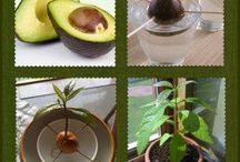 Rośliny, owoce i warzywa..