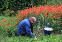 Cwmbran Landscape Gardeners / Landscape Gardening In Cwmbran, Pontypool, Newport and Cardiff
