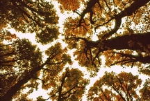Autumn   all things Autumn