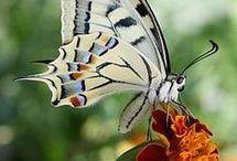 Insectes du jardin