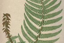Antique botanic and bird pictures
