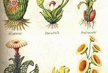 Art: plants