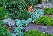 Landscaping arrangments