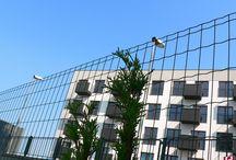 BETAFENCE: Pantanet wokół Villi Capri / Villa Capri to osiedle mieszkaniowe w Chorzowie. Jasno pomalowane bloki dobrze komponują się z zielonymi oczkami siatki zgrzewanej Pantanet Family. Dzięki swej elastyczności siatka może być także montowana na uskokach i wzniesieniach.