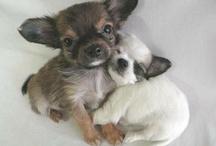 Cutest pets