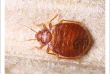 #Cost Of Bed Bug Treatment