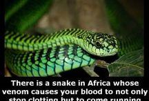 Amfibies & Reptiles