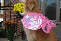 """""""oooh Little Baby"""" / I miss my baby """"Macy Grace"""" Golden Retriever dogs are the best! / by Ronda Hill"""