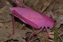 Bugs and Beetles / by Bonnie Koenig
