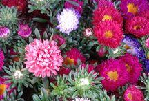 Wochenmarkt 14.08.2015 / Liebe Kunden! Heute ist wieder Markttag in Edigheim!  Auch heute sind wir wieder mit unserem Blumenstand auf dem Edigheimer Wochenmarkt präsent!  Wir bieten Ihnen frische Rosen aus heimischem Anbau, Sonnenblumen regionaler Erzeuger, bunte Sommerblumen von Gärtnern der Region und blühende Pflanzen von Gartenbaufachbetrieben aus Ihrer Umgebung!  Schauen Sie mal vorbei auf dem Edigheimer Wochenmarkt! Wir freuen uns auf Ihrern Besuch!