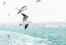 طيور مهاجره