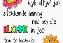 Afrikaanse Whatsup