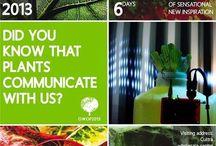 Our World of Plants 2013 / Tijdens Our World of Plants bieden wij in onze Cash & Carry sensationele inspiratie met planten van over de hele wereld. De volgende thema's stonden dit jaar centraal: Plant Gallery, Zen, Organic Cinema en The Moving Plant.