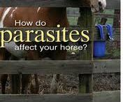 Horse and Health / Different information about sicknesses of horses and how to take care of it. (Warning, some images are quite sensitive)