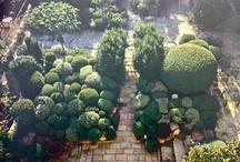 Garden/Landscape
