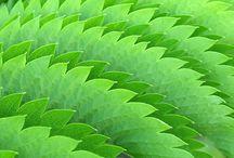 My plant photos