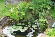 Small Ponds In Containers